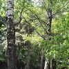 Крюковский лесопарк. Маршрут тихого отдыха